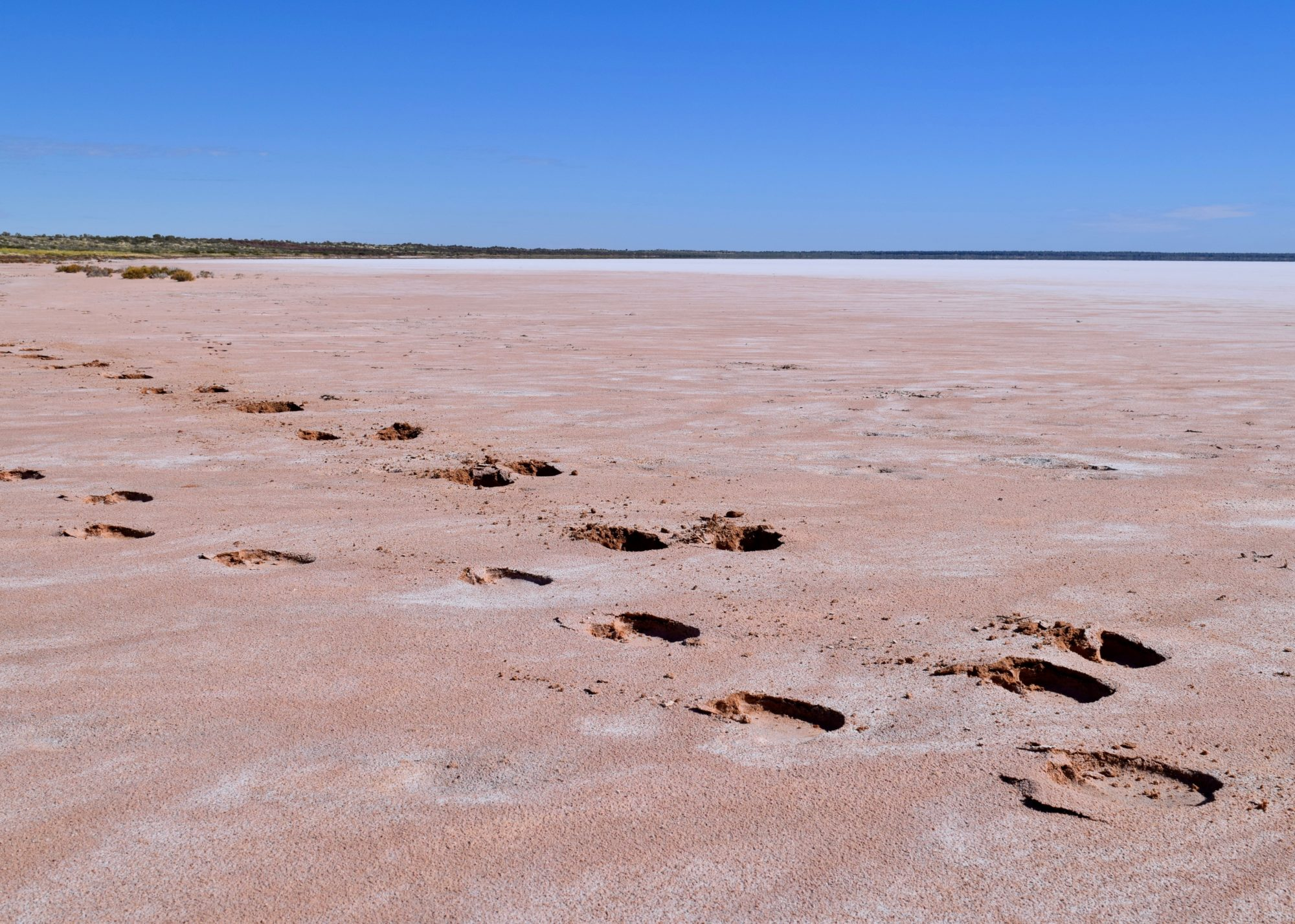 Tracking Camels, Lake Mackay, WA